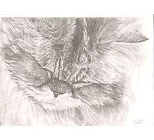 The Purring Cat Photographic Print