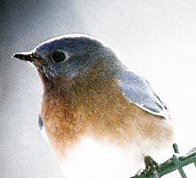 Bluebird on a swing by KSKphotography