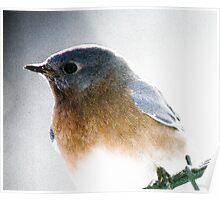 Bluebird on a swing Poster