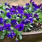 Pansies In A Pot by lynn carter
