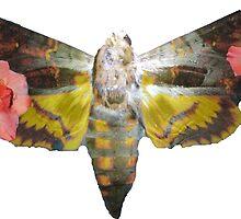 Floral Moth Of Death by Mekenzie Price
