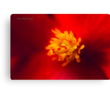 A Burst of Red - Begonia Canvas Print