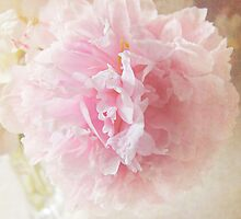 Summer Peony by thesweetestdays