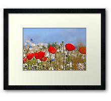 Summer Colour Framed Print