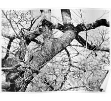 Gnarled and bent, like so much of life Poster