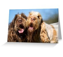 Italian Spinoni Dogs Woody & Ruben Greeting Card