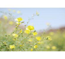 yellow cups - for amanda Photographic Print