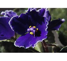 Violet Close-Up Photographic Print