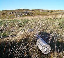 Newfoundland Field by phaedra1973