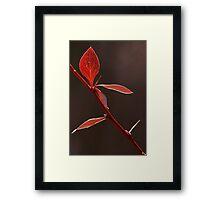 Autum 5305 Framed Print
