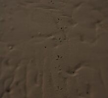 Bird Tracks on a Sandbar by Tamie Buffington