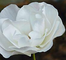 Pale Beauty by lynn carter