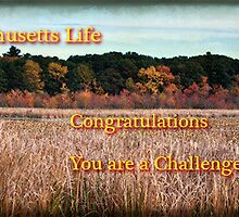 Massachusetts Life – Challenge win Banner by Owed to Nature