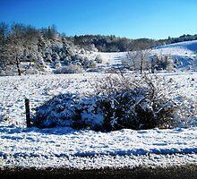 snow bush by LoreLeft27