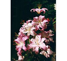 Tower of Lilies Photographic Print