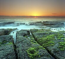 """New Life on Old Shores"" ∞ Woody Head, NSW - Australia by Jason Asher"