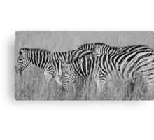black stripes, white stripes Canvas Print