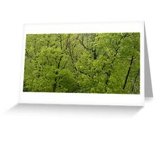 In the Trees - Nature Photography Greeting Card