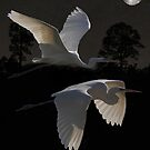 Two Great Egrets In Flight by Eric Kempson