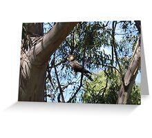Yellow-Tailed Black Cockatoo Greeting Card