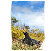 Marine Iguana, Dragon Hill, Galapagos Poster