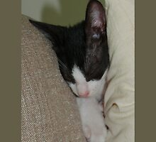 Cat in Pillows by Titia Geertman