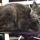 Nextdoor neighbour cats/(2 of 2) -(240212)- digital photo by paulramnora