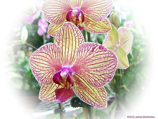Orchid by James Brotherton