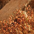 afternoon sunshine, joshua tree by mellychan