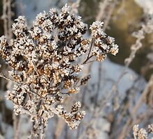 Ice Crystals by Amy L Edwards