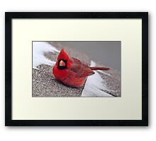 Thank You For The Sunflower Seed! Framed Print