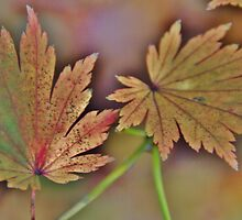 Green leaf by Mark  Johnstone