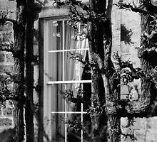 Window by Mark  Johnstone
