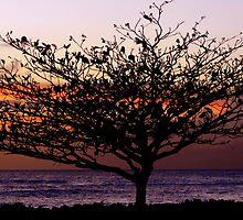 Aloha Dancer by Angelika Sielken