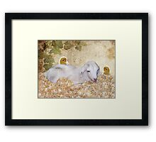 Spring Brings New Life Framed Print