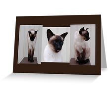 Triptich of Siamese Cat Inoe Greeting Card