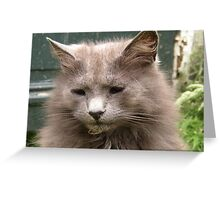 Portrait of Blind Cat Kyra Greeting Card