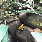 London Zoo/Reptile House/Poisonous Frogs(1 of 2) -(190212)- digital photo by paulramnora