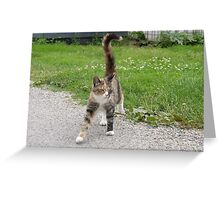 Cat Tabby Calico Greeting Card