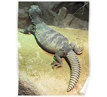 London Zoo/Reptile House -(190212)- digital photo Poster