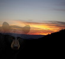 Black Bear Sunset by Forrest Tainio