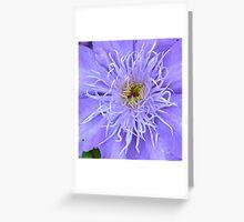 Clematis [Macro] Greeting Card