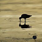 Water Birds by HanieBCreations
