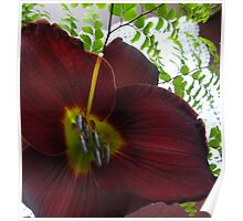 Wine Day Lily. Poster
