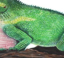 Cuban Knight Anole Sticker