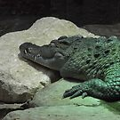 London Zoo/Crocodile/(2 of 2) -(190212)- digital photo by paulramnora