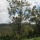 Trees at Lake Monduran 2 by STHogan