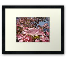Beautiful Spring Fine Art Photography Pink Dogwood Flowers Framed Print