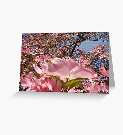 Beautiful Spring Fine Art Photography Pink Dogwood Flowers Greeting Card