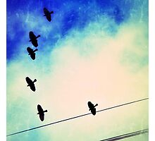 Red-winged blackbirds flying overhead, with wires Photographic Print